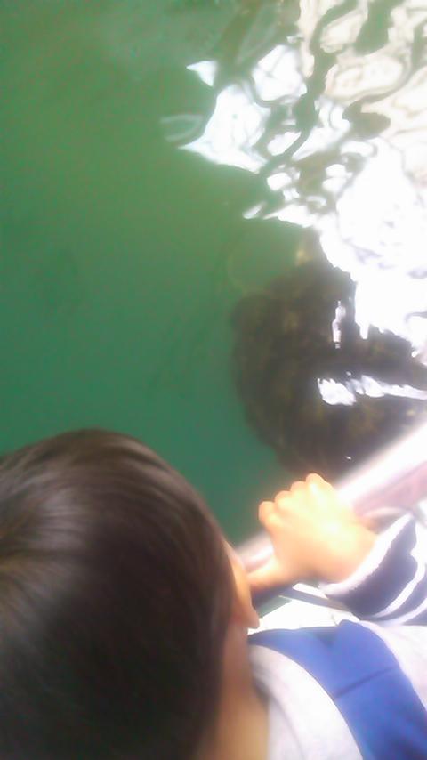 海ガメ公園☆